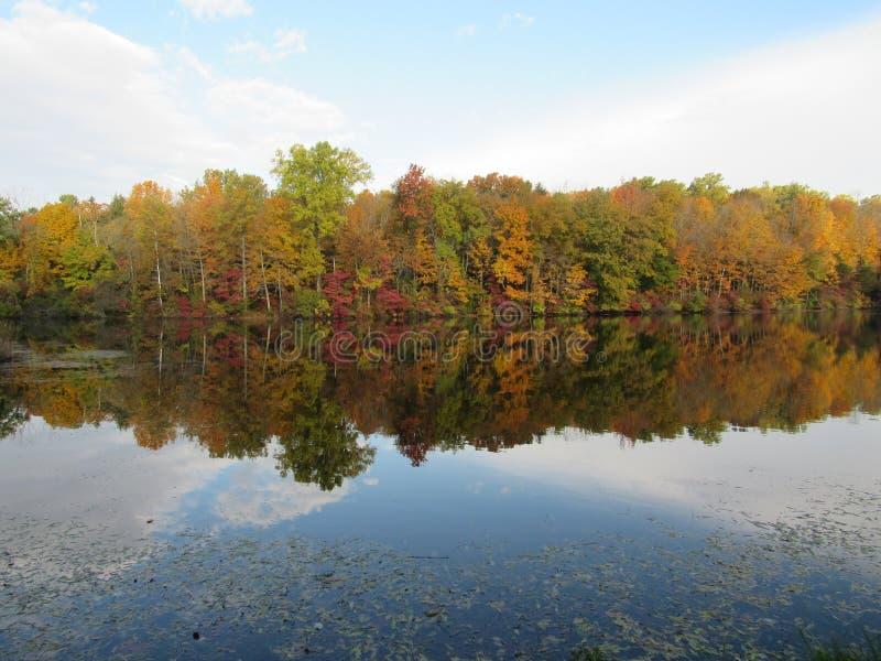 Листва осени отражая в воде на озере лили стоковое изображение rf