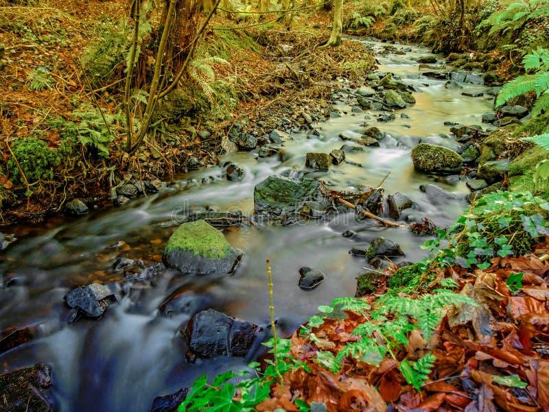 Листва осени отразила в малом реке с покрытыми мх камнями стоковая фотография rf