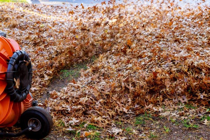 Листва солнечного дня красочная дует человек воздушных потоков в дуновениях рабочей одежды с желтых и красных упаденных листьев о стоковое фото rf