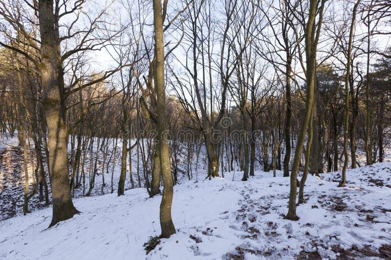 Лиственные деревья в зиме стоковые фотографии rf