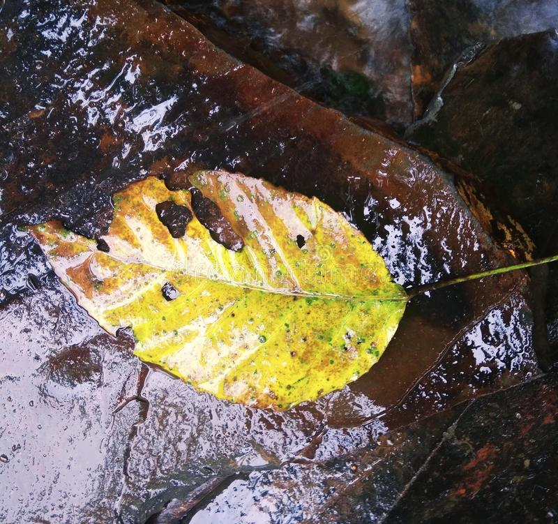 Лиственные листья помыли прочь снесенный течениями воды стоковое фото