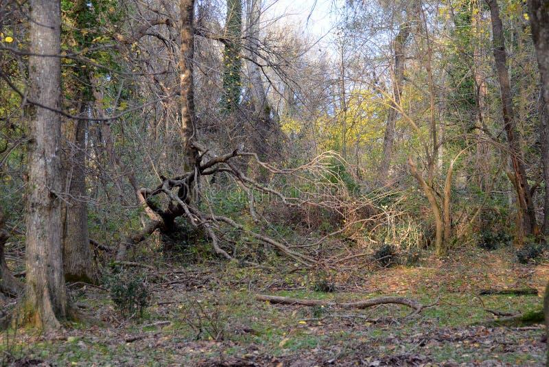 Лиственный лес в осени стоковое фото rf