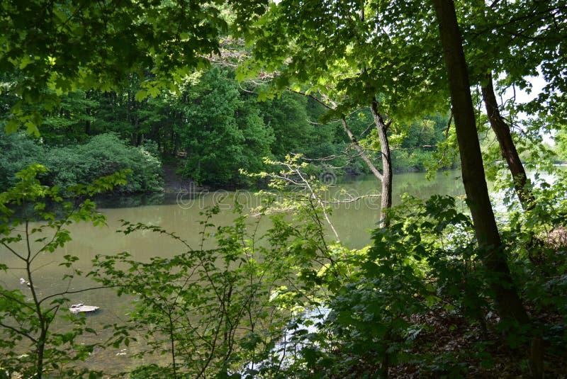 Лиственный красивый лес с рекой леса, нетронутая естественная природа стоковое фото
