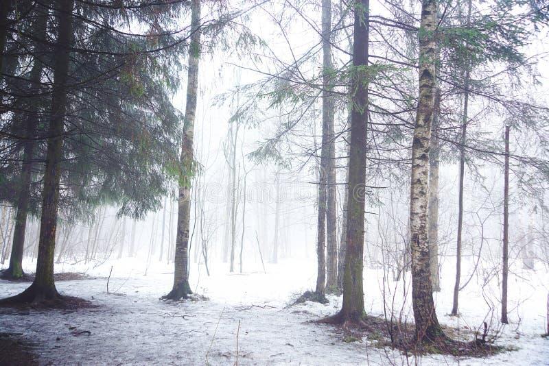 Лиственный лес в предыдущей зиме в сильном тумане стоковое фото rf