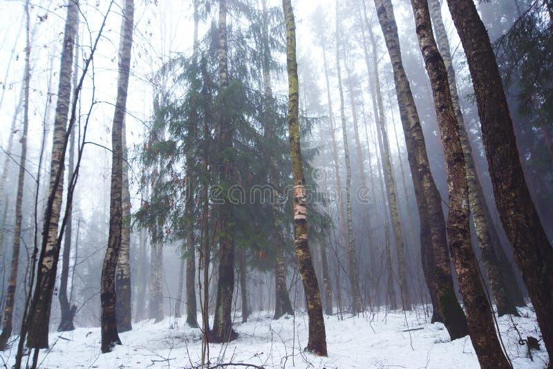 Лиственный лес в предыдущей зиме в туманной погоде стоковая фотография