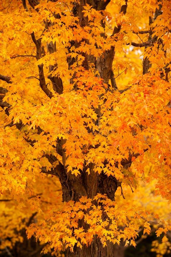 листво Англии новое стоковые фото