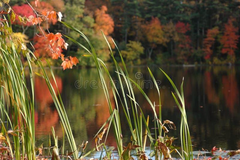 листво около тиши пруда стоковое фото