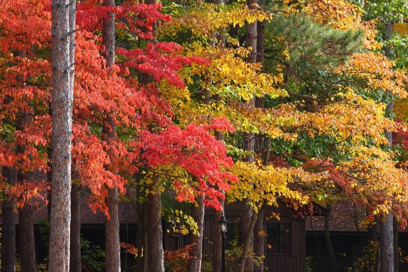 листво падения Огайо стоковая фотография