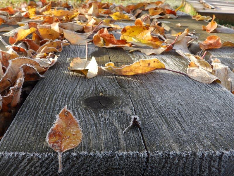 Листовое золото падение стоковая фотография rf