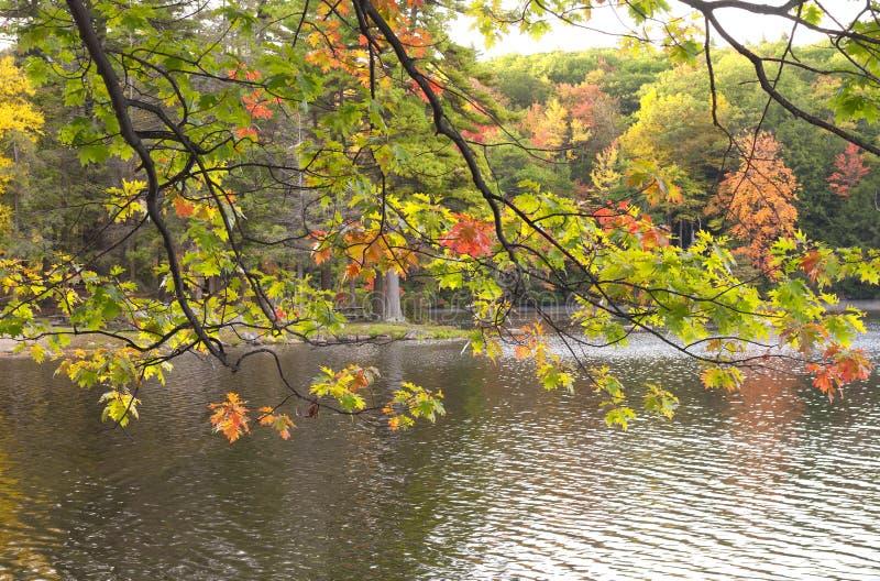 Листопад Новая Англия стоковая фотография