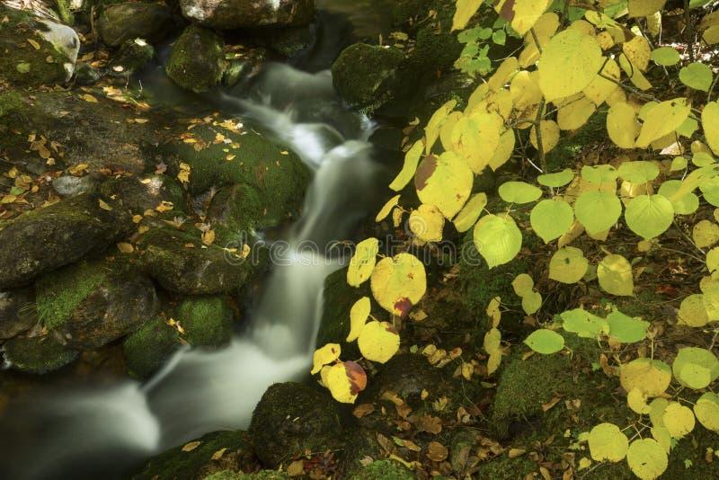 Листопад около каскадируя ручейка, белые горы, новое Hamp стоковое изображение