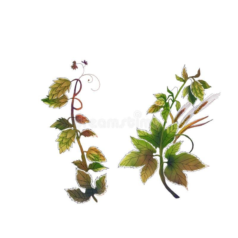Листья акварели и конусы хмеля на белой предпосылке иллюстрация штока