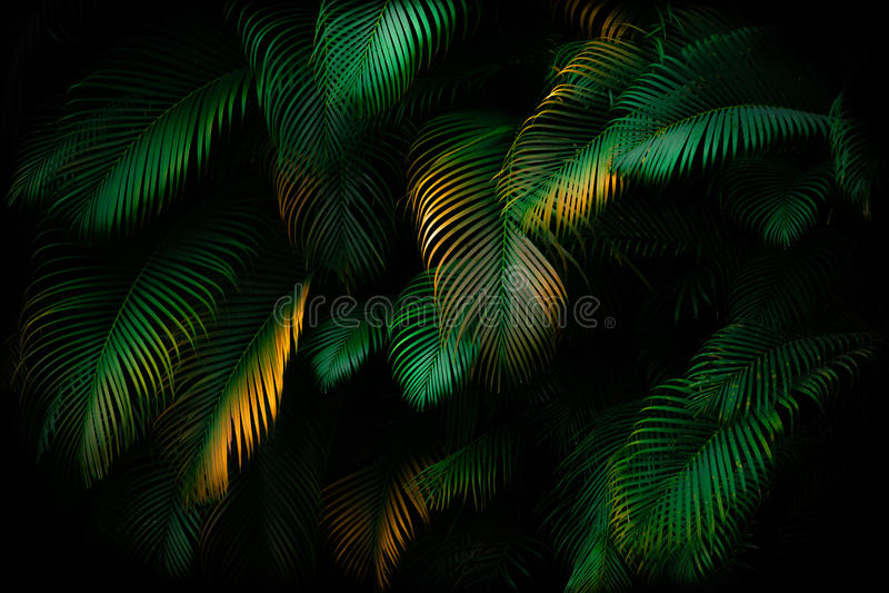 Листья ладони стоковое фото