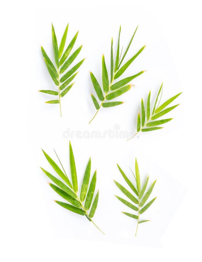Листья бамбука на белой предпосылке стоковые изображения