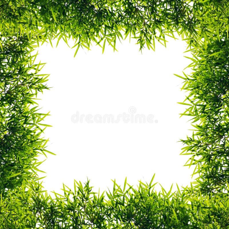 Листья бамбука рамки изолята стоковое изображение