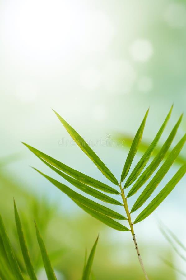 листья бамбука стоковые фото