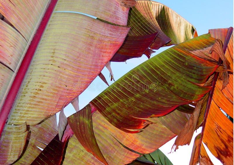 листья банана цветастые стоковое изображение rf