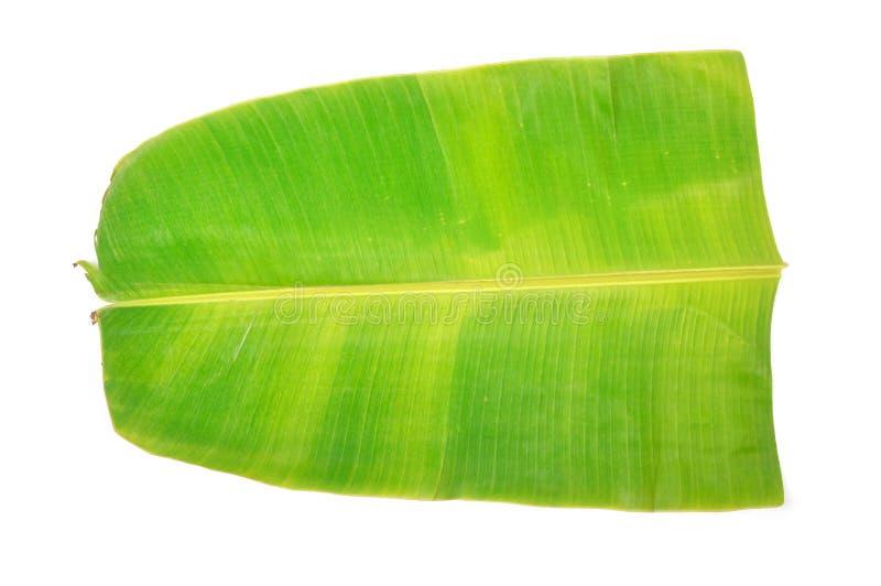 листья банана стоковая фотография rf