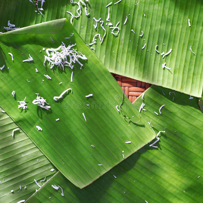 Листья банана стоковые изображения rf