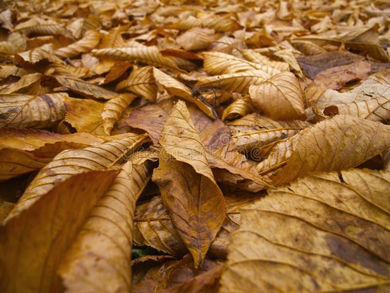 Листья Брайна стоковое фото rf