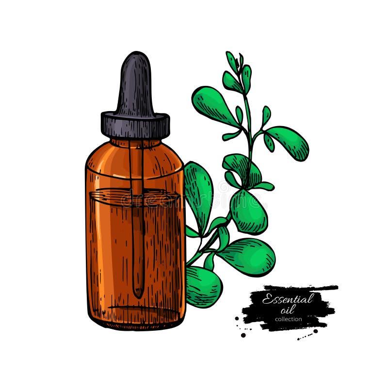 Листья бутылки и майорана эфирного масла майорана вручают вычерченное vec иллюстрация штока