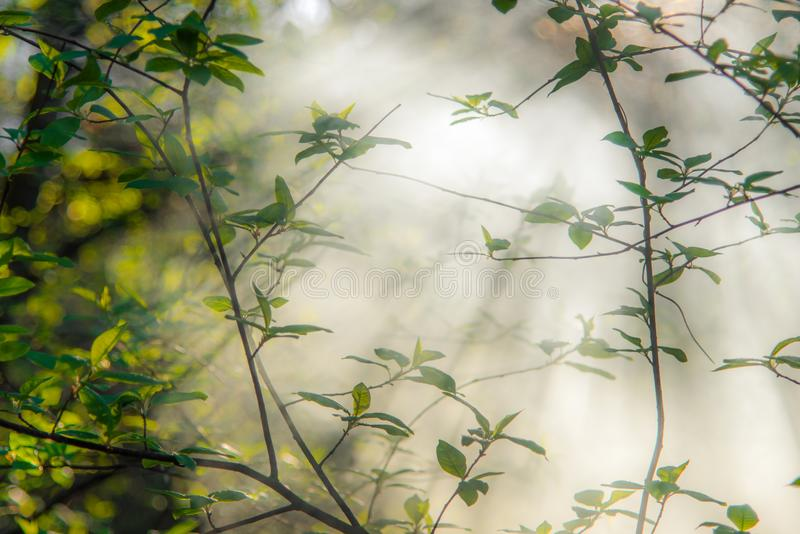 Листья весны, туманное утро стоковое фото rf