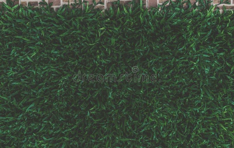 Листья взгляда сверху темные ые-зелен стоковая фотография