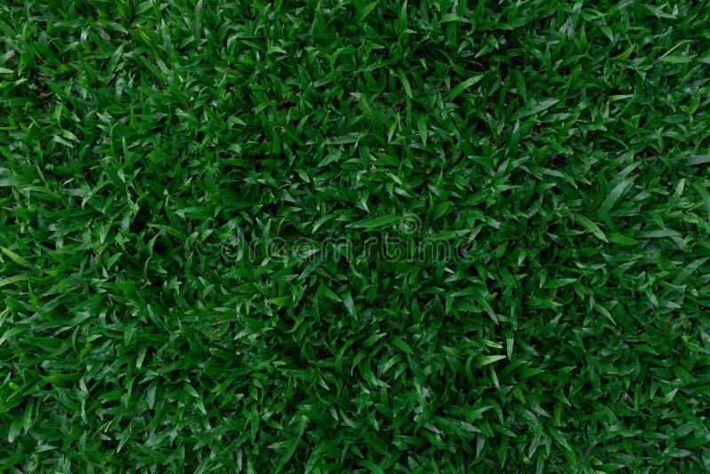 Листья взгляда сверху темные ые-зелен стоковые фото