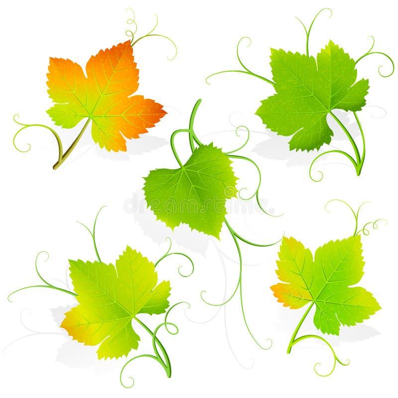 Листья виноградины. Вектор иллюстрация штока