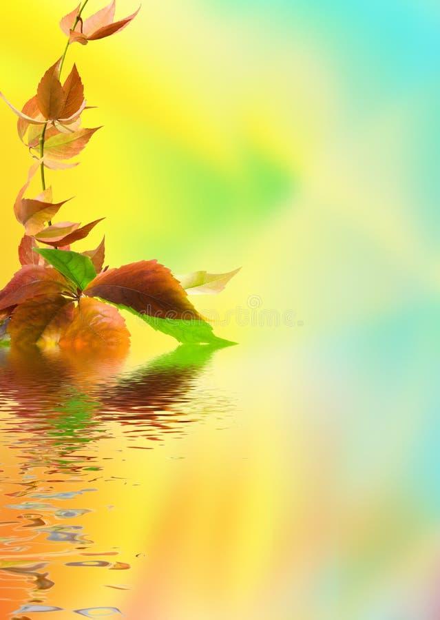листья виноградины одичалые стоковые изображения rf