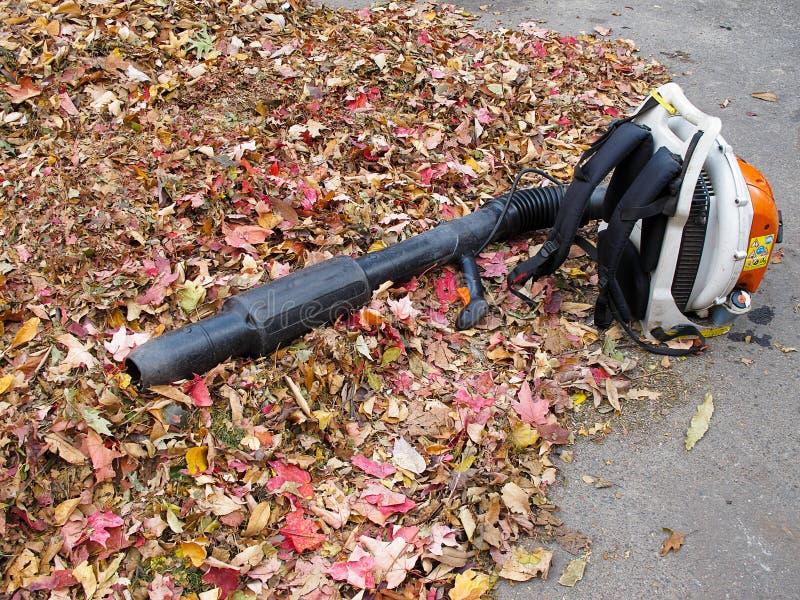 листья воздуходувки стоковое изображение rf
