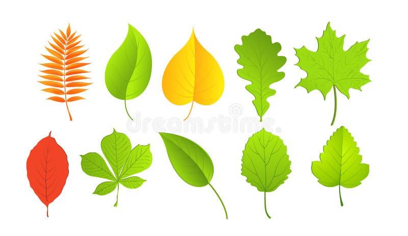 Download Листья в зеленых и желтых цветах Иллюстрация вектора - иллюстрации насчитывающей brougham, падение: 33726970