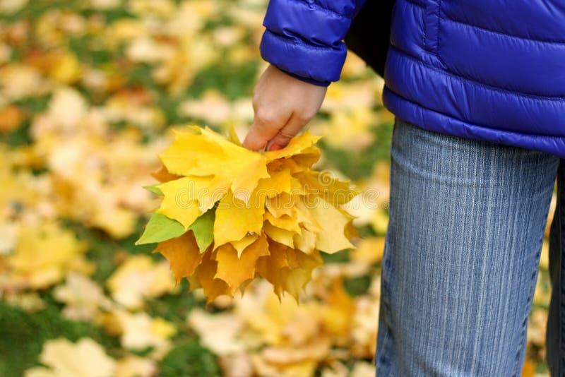 Листья в руках девушки стоковая фотография