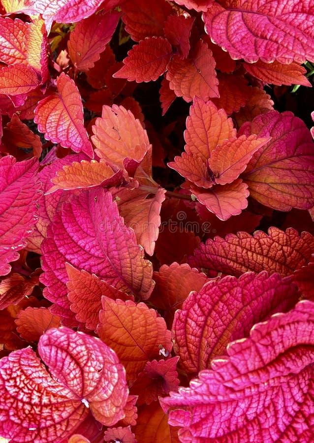 Листья в саде стоковое изображение rf