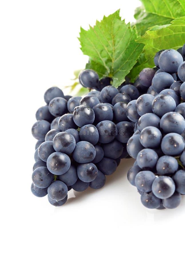 листья голубых виноградин зеленые стоковое фото rf