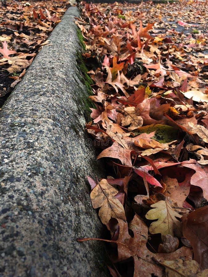 Листья грязные осени стоковые фотографии rf