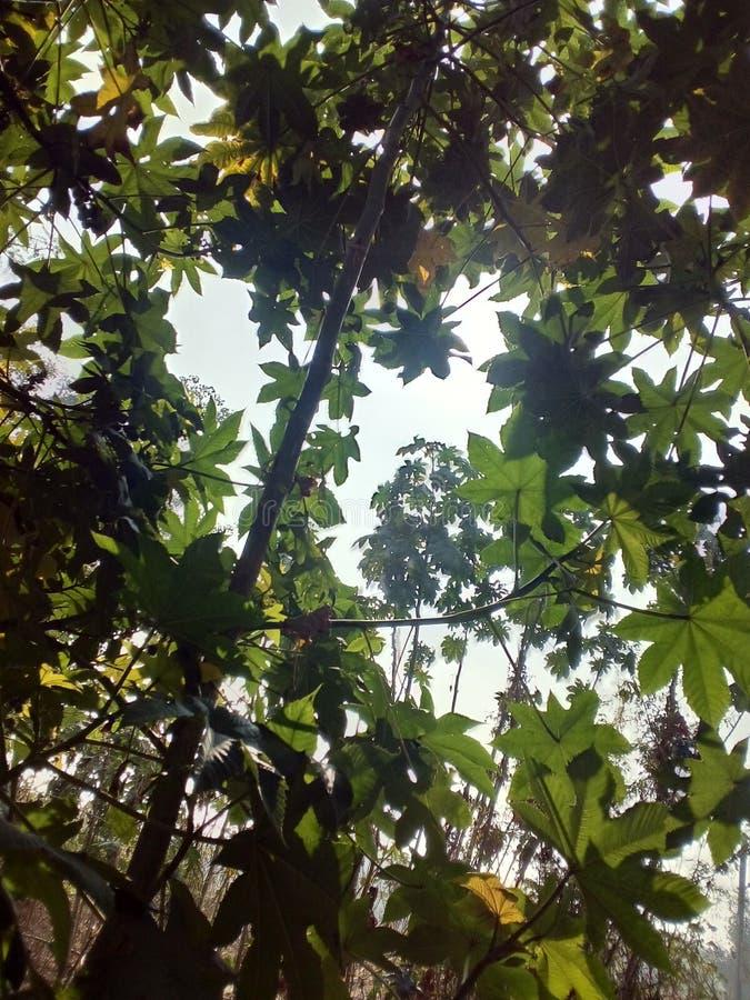 Листья деревьев стоковое фото rf