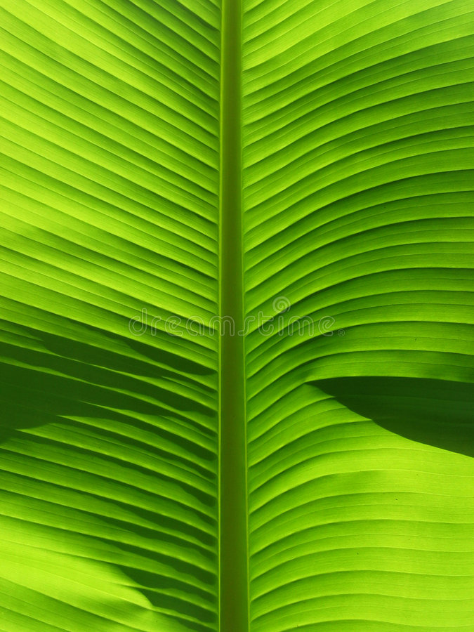 листья деталей стоковая фотография rf