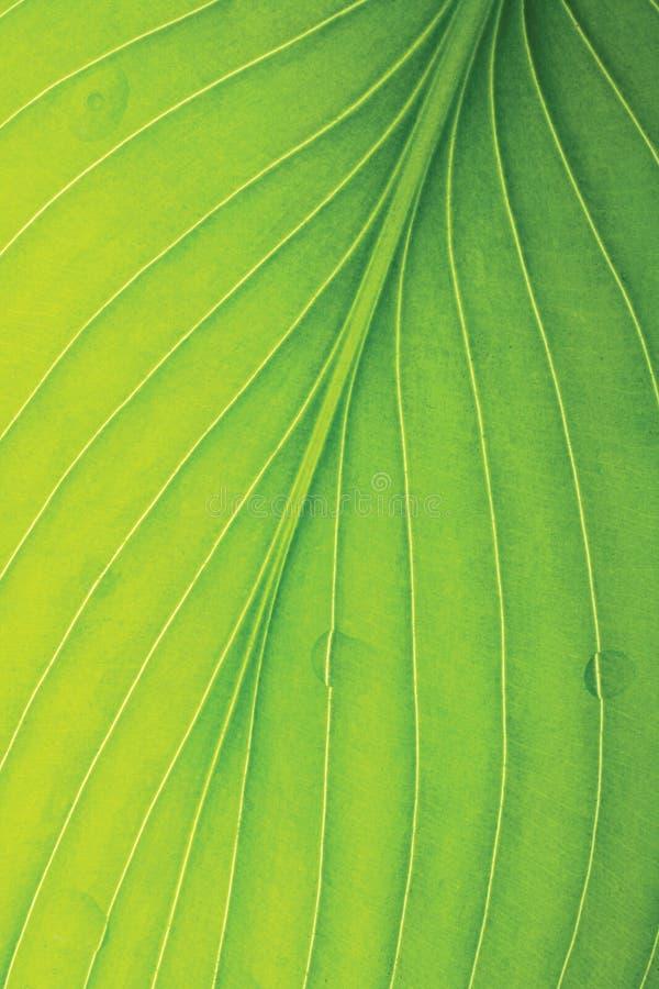 листья детали зеленые тропические стоковое изображение rf