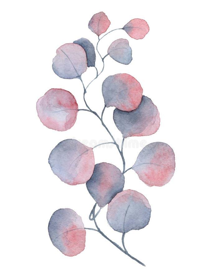 Листья евкалипта акварели фиолетовые бесплатная иллюстрация
