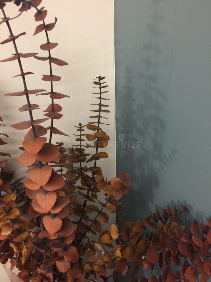 Листья евкалипта стоковые изображения