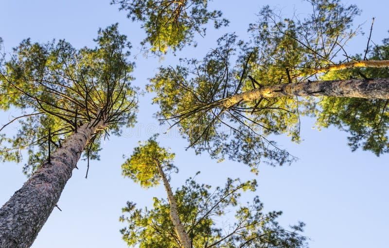 Листья желтого цвета на деревьях стоковая фотография
