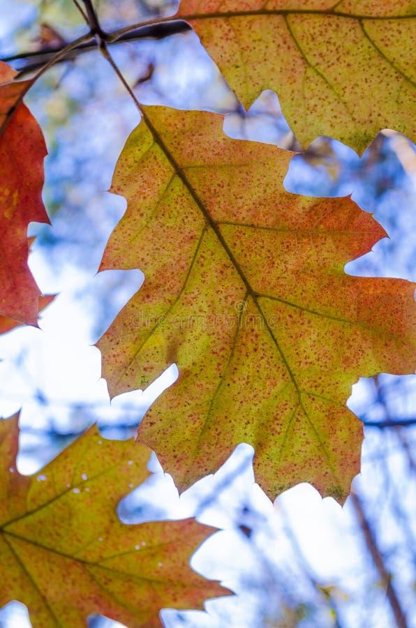 Листья желтого цвета на деревьях стоковое фото rf