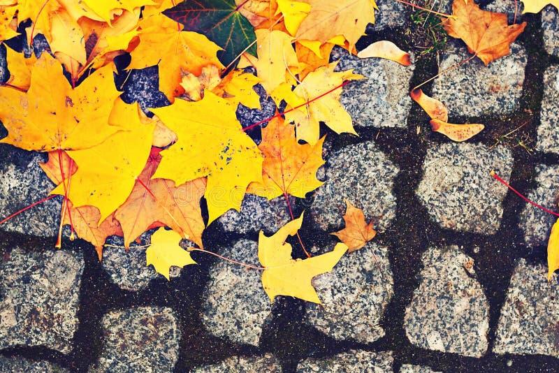 Листья желтого цвета на мостоваой булыжника стоковые фотографии rf