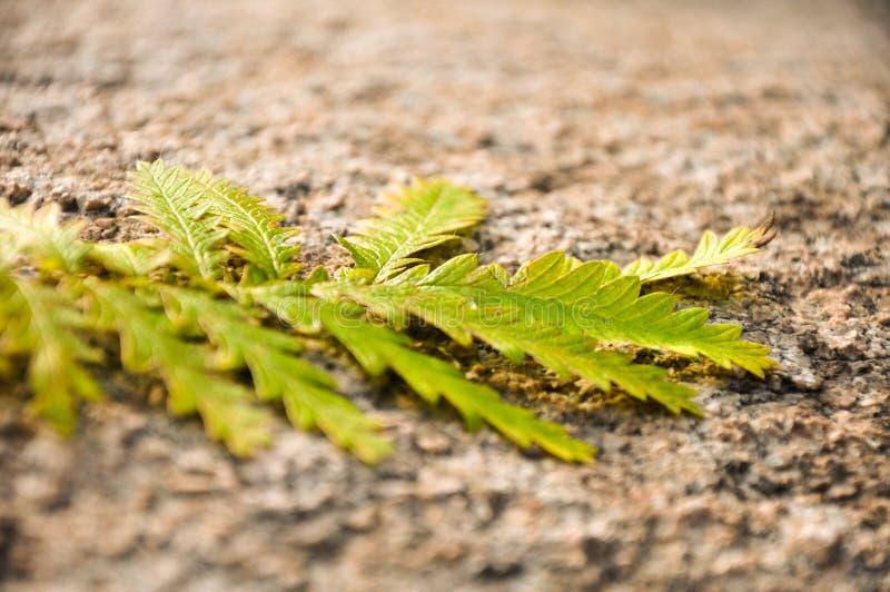 Листья желтого цвета осени на утесе стоковое изображение rf