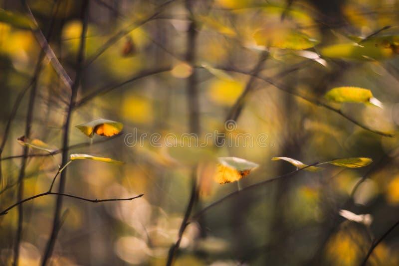 Листья желтого цвета осени стоковое изображение rf