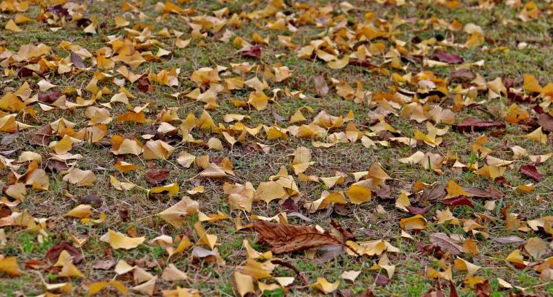 Листья желтого цвета на траве стоковая фотография