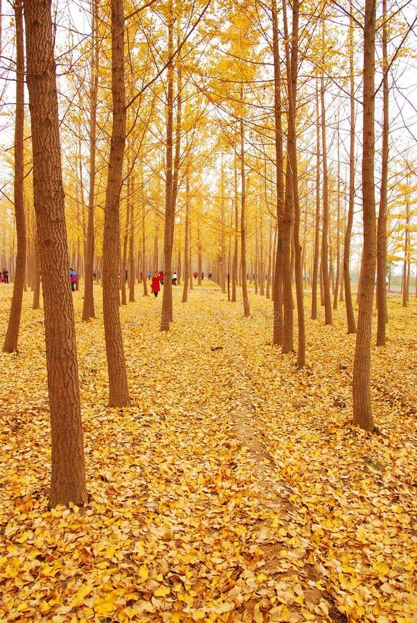 Листья желтого цвета осени стоковое фото rf