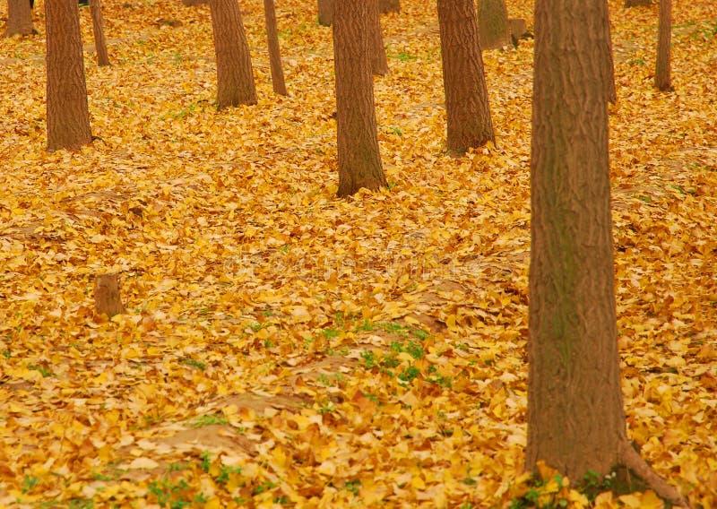 Листья желтого цвета осени стоковая фотография