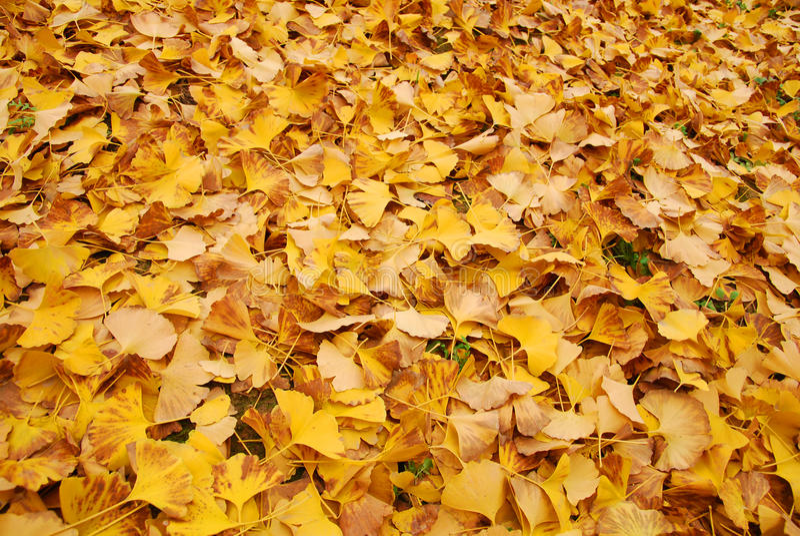 Листья желтого цвета осени стоковое фото